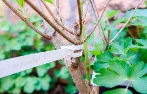 Efprinta_etykiety do ogrodu, etykiety ogrodnicze